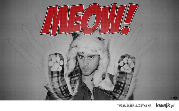 meow leto cat
