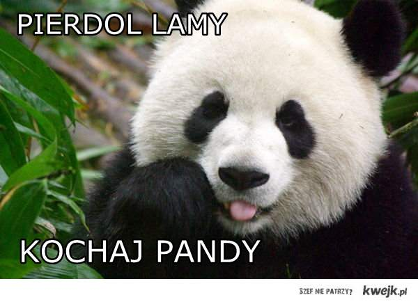 Pandy ! <3