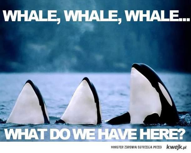 whale. whale, whale
