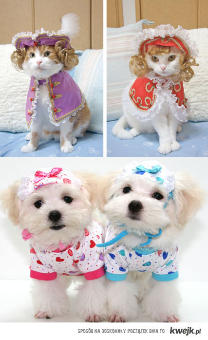 Pets in clothes