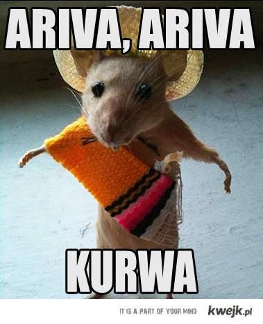 Ariva Ariva