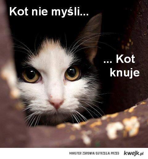 Kot_knuje