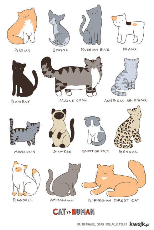 ♥cats♥