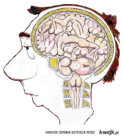 Mózg faceta .