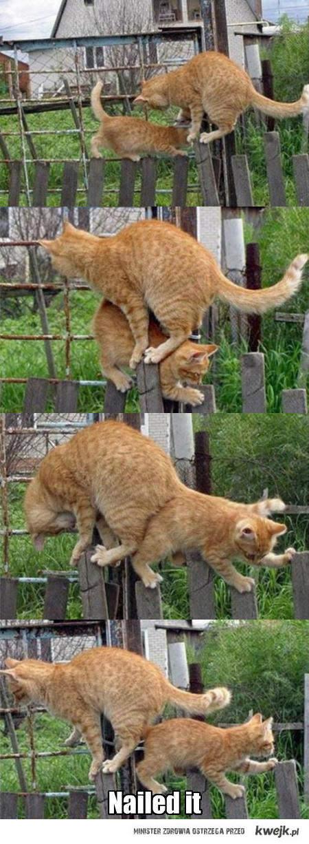Dwa koty jeden płot