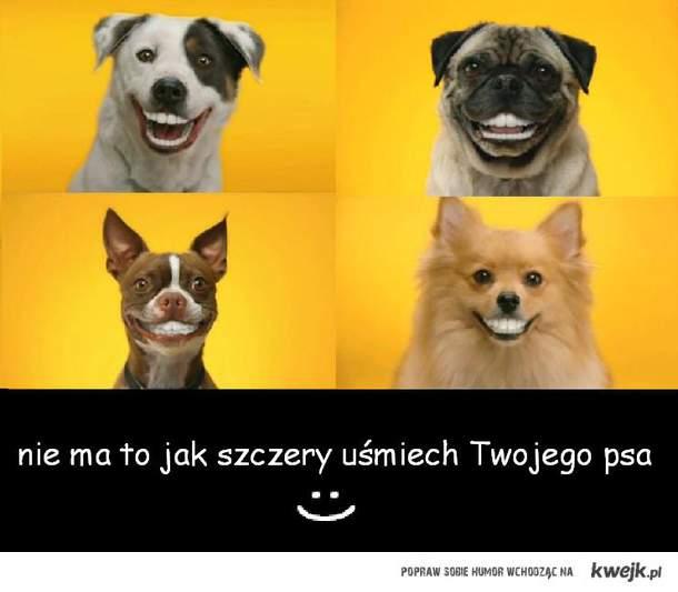 Szczery uśmiech psa
