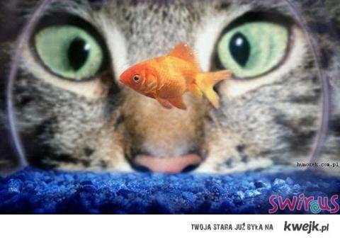 kotek i rybka