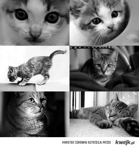 Koty ♥