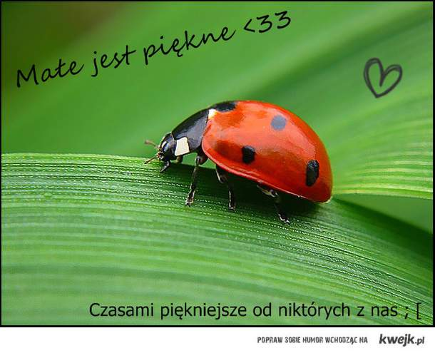 Małe ale piękne ♥
