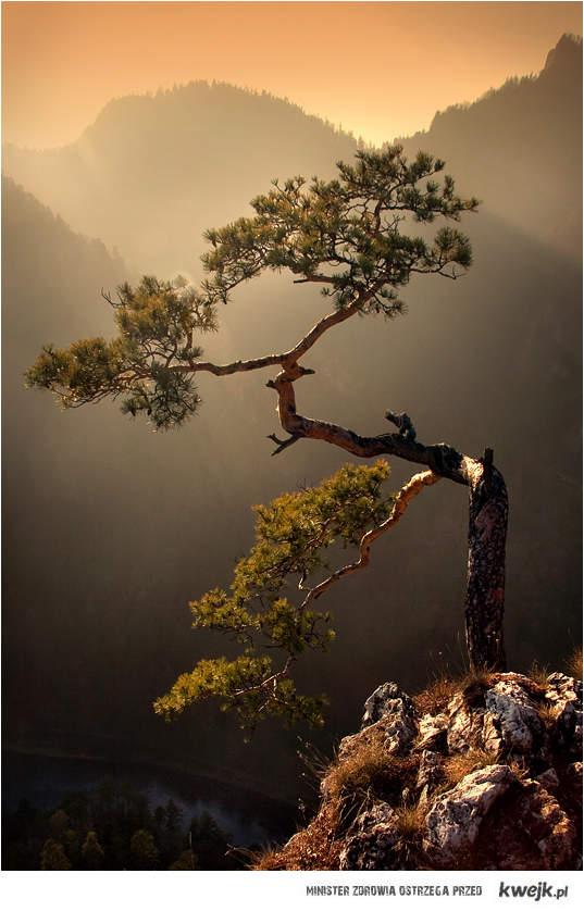 drzewko przy przepaści