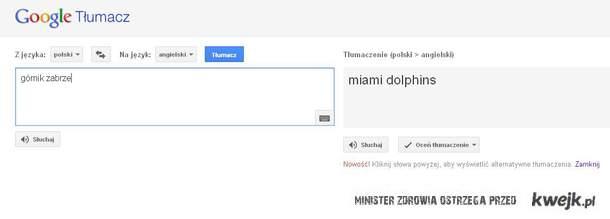 delfiny z zabrza