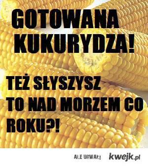 GOTOWANA KUKURYDZA!