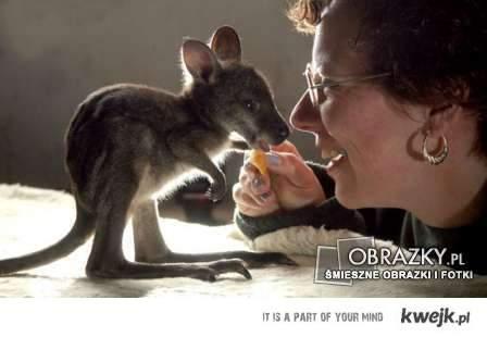 kangurek ^^