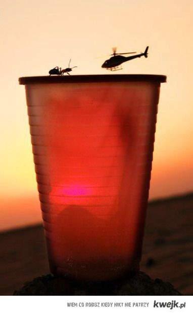 ant and choper