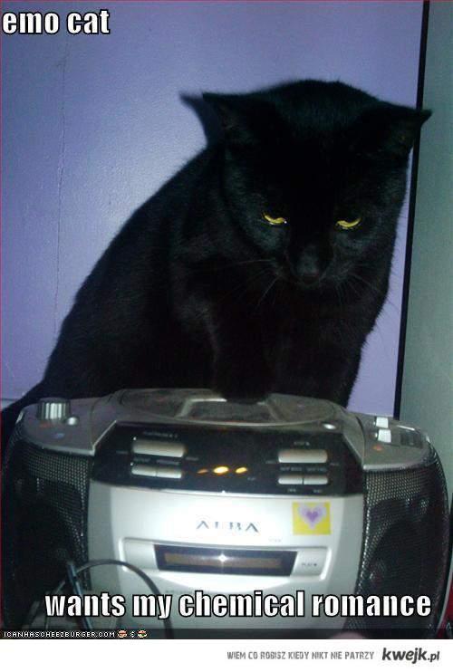 Emo Cat MCR <3