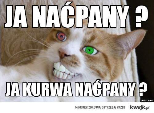 Naćpany kot ;d