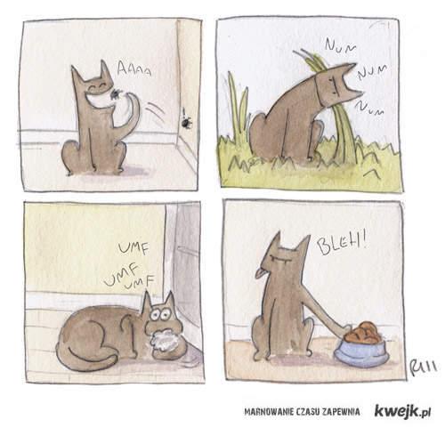 Nie rozumiem zwierzakow