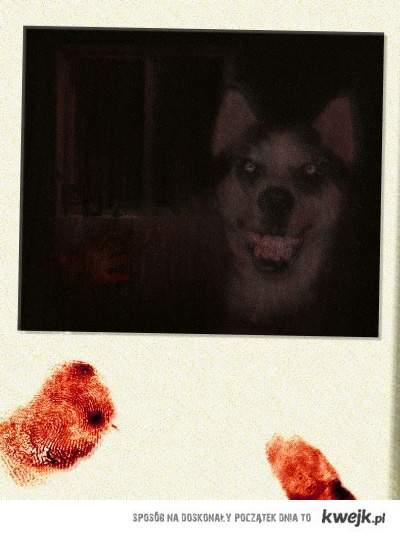 Smile.Dog