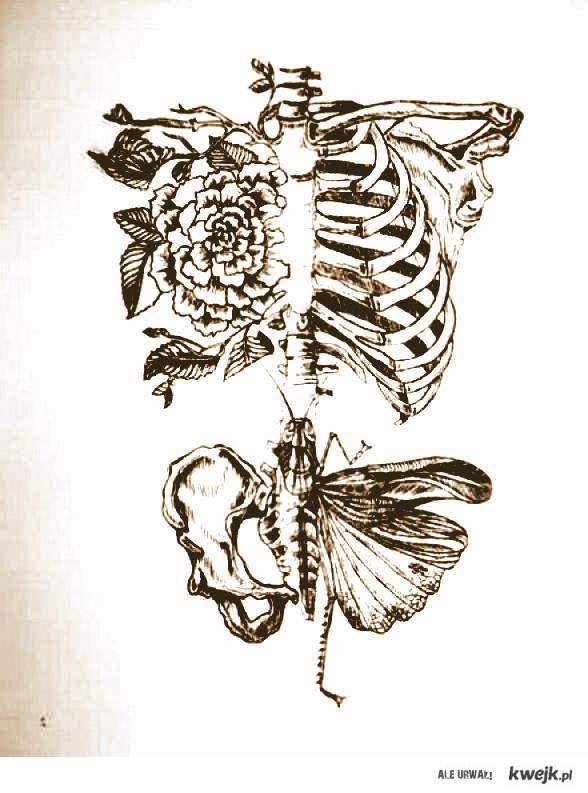 szkielet *.*