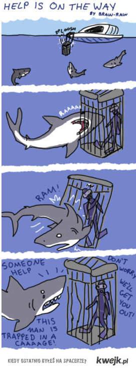 Jak mysla rekiny