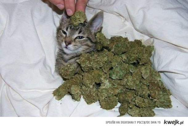chillautowy kotek...