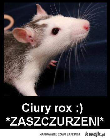 Sczury rox