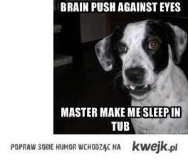 RETARD DOG