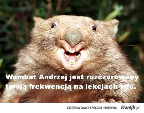 Wombat Andrzej