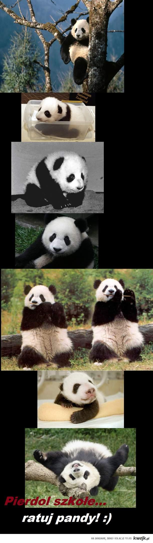 ratuj pandzie
