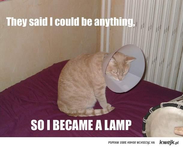 kotek lampa xD