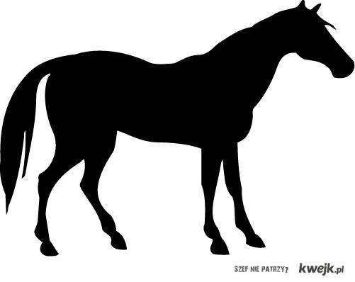 nienawidze jak jarają się koniami
