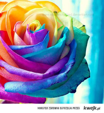 kwiat . =D