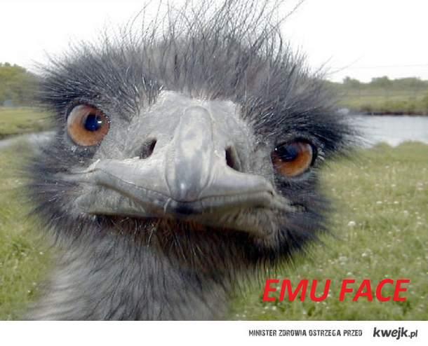 Emu face ;d