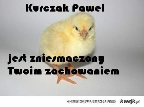 kurczak pawel