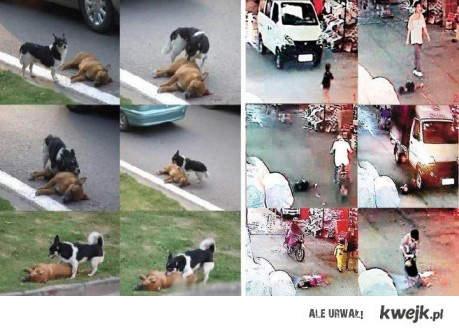Zwierzęta i ludzie