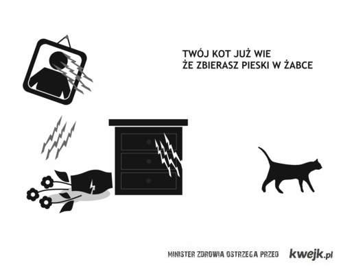 Twój kot już wie