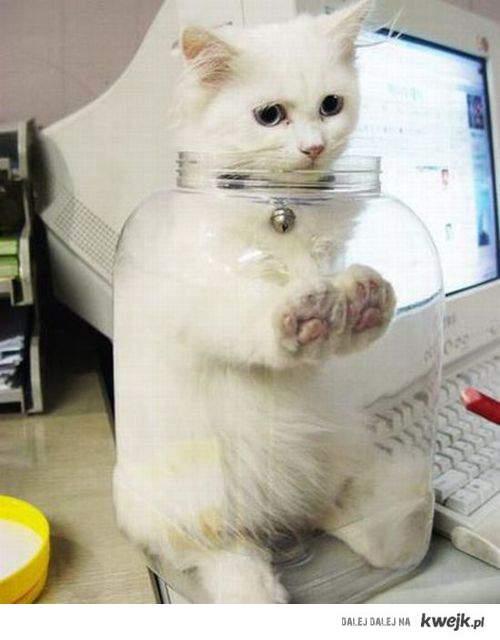 Kot w słoiku