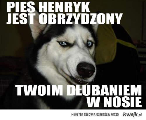 Pies Henryk