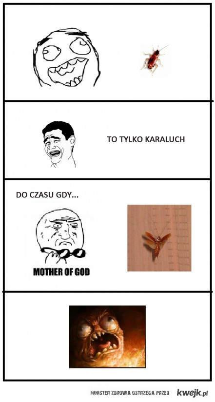 Karaluch