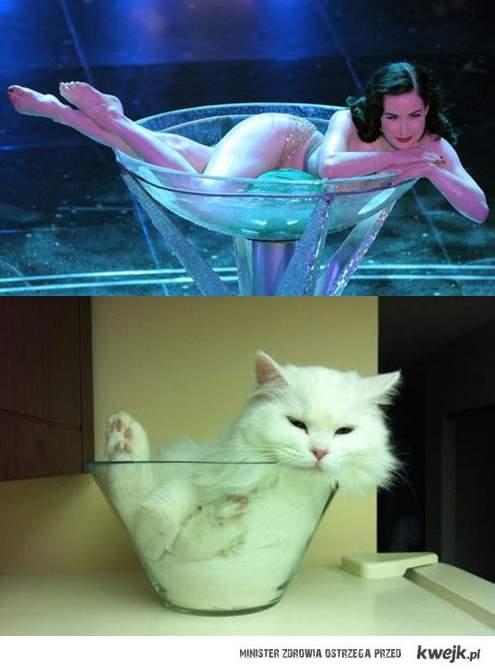 von cat