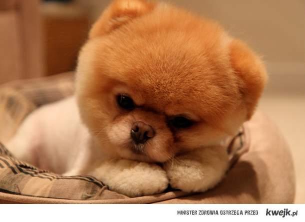 Dogie <3