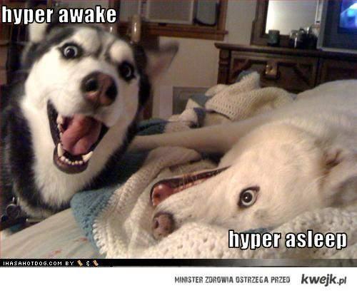 Hyper dogs