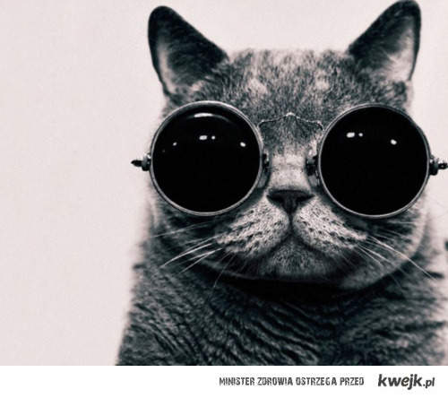 Kociak w okularkach