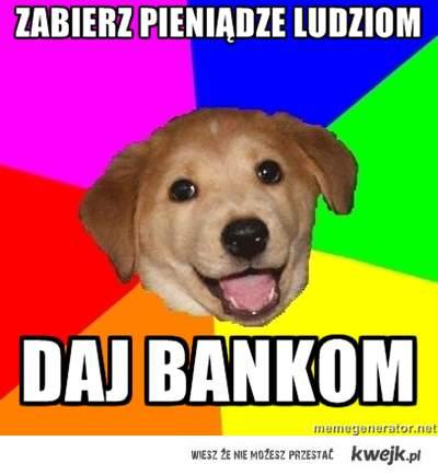 pies dobra rada radzi