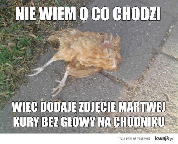 kura bez głowy