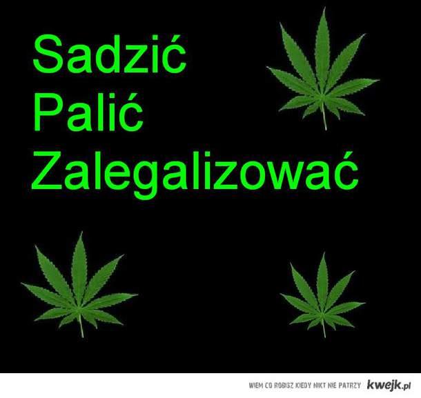 sadzić palić zalegalizować!