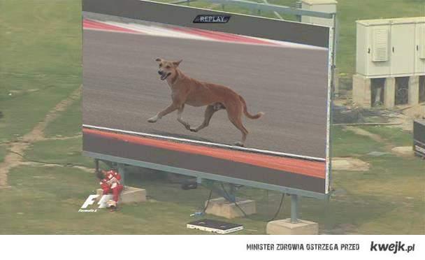 Pies na torze