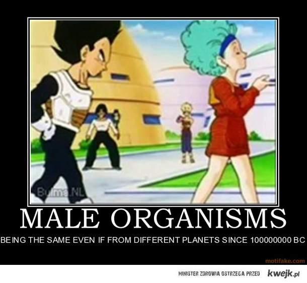 male organizm