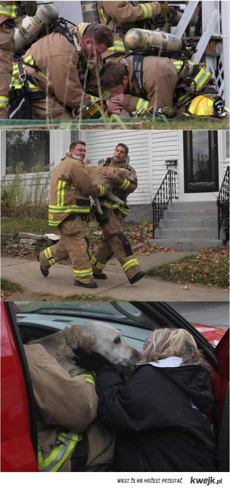 Strażacy ratują psa