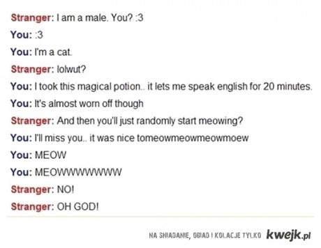 Jestem kotem